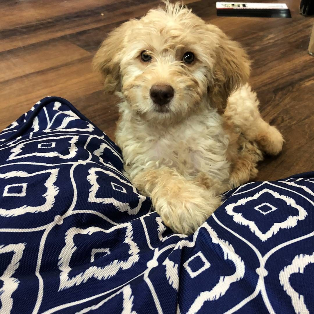 Cutecustomeralert Duncan Picked Out A New Bed At Pet Valu Bayonne Nj Pet Valu Pets New Beds Bayonne