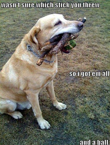 Meme Good Dog Funny Dog Pictures Funny Animals Funny Dogs