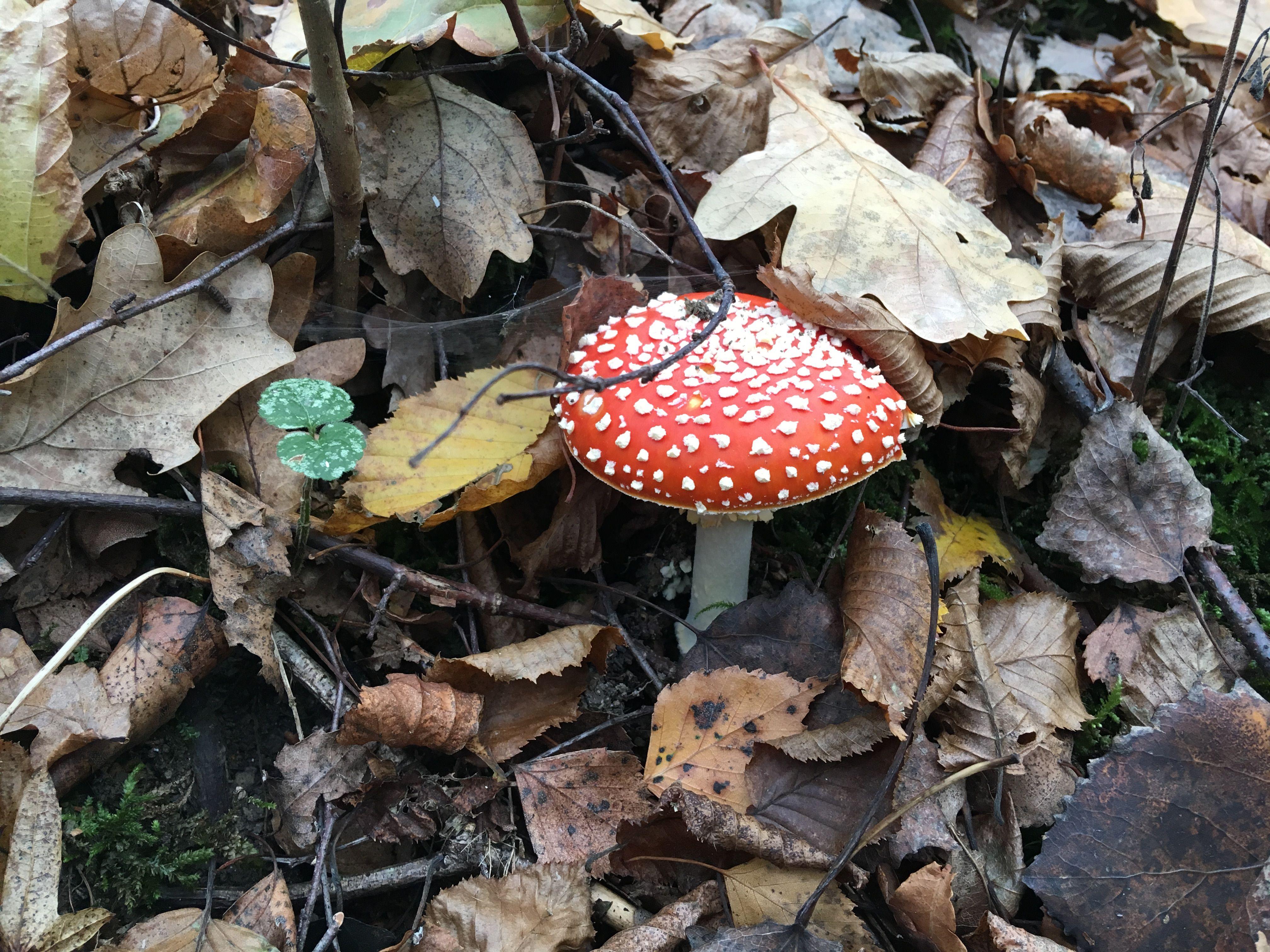 Этот гриб лучше не есть