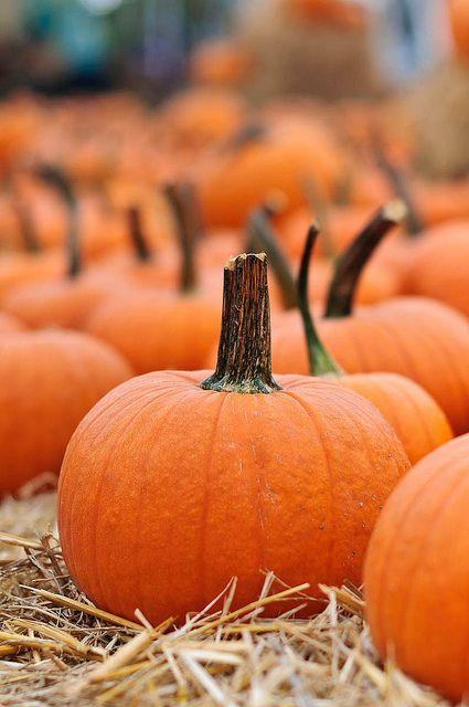 The Witches of Muckmire Marsh #autumnscenes