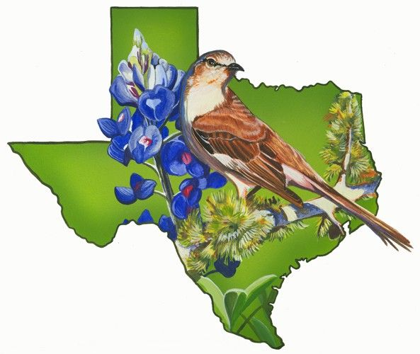 texas state bird and flower the mockingbird and the bluebonnet