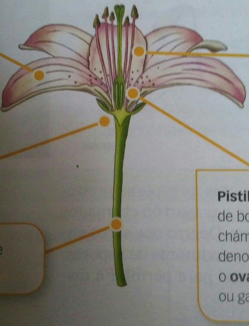 Reproducción das plantas con sementes plants world life