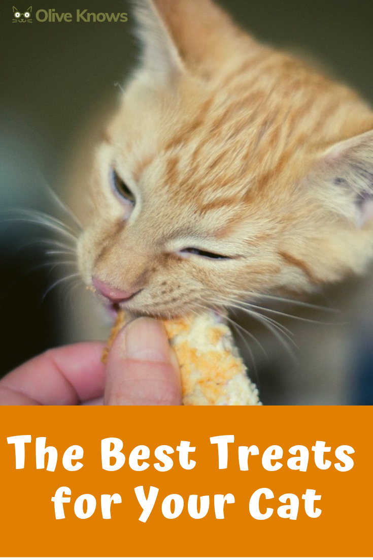 The Best Treats for Your Cat Foods cats can eat, Cats
