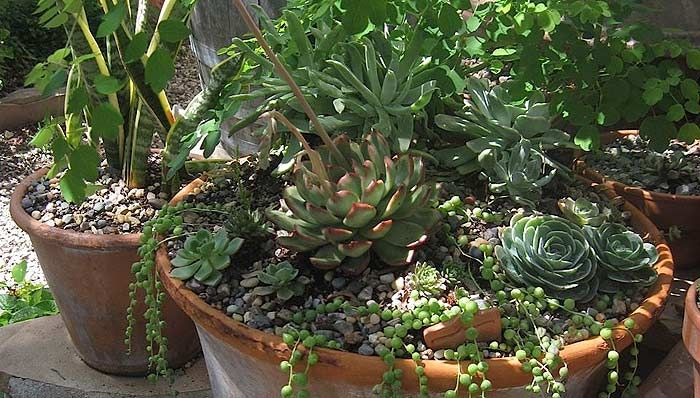 Beau Southern Gardens | Southern California Gardening: Recipe For A Stylish  Container Garden