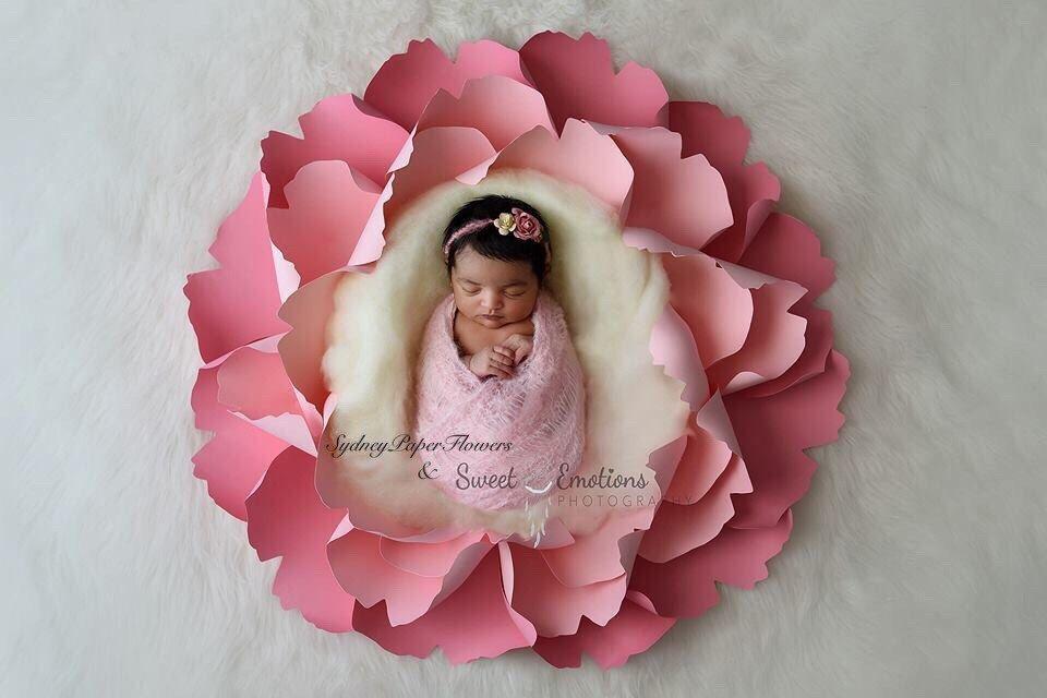 Pin By Amanda Nichols On Picture This Newborn Posing Newborn