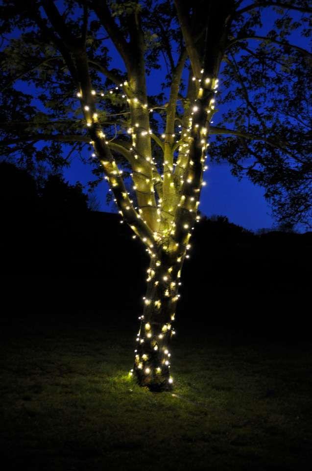 Fairy Lit Trees Outdoor Wedding