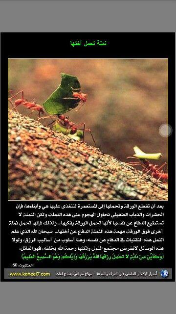 نملة تحمل أختها Islamic Information Pandora Screenshot Islam