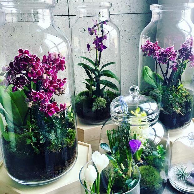 Kwiatowe Kompozycje Indoor Orchids Plants Beautiful Terrariums