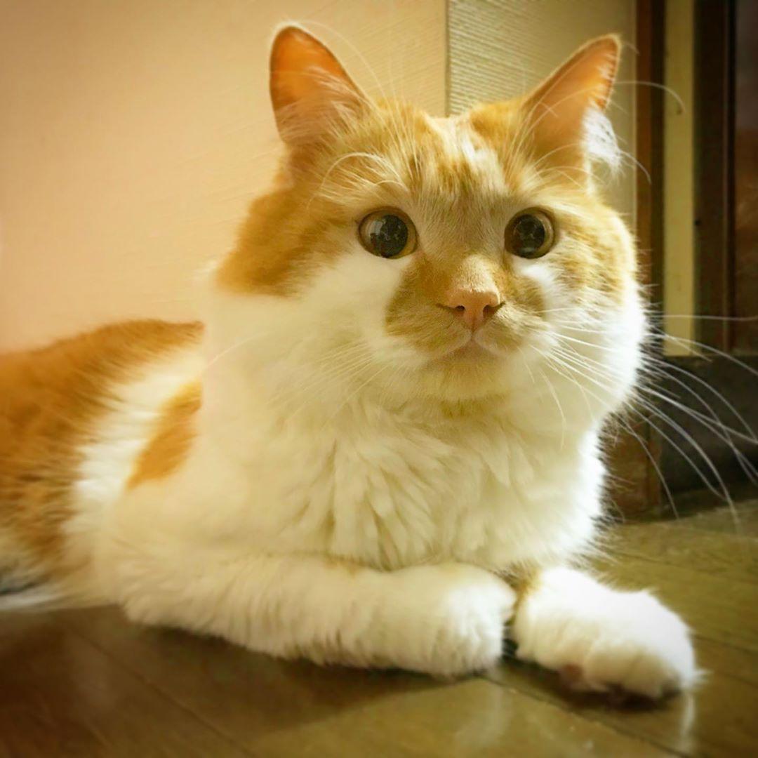 猫のDoro😸どろちゃん @dorochan_cat , 不意打ちの間抜け