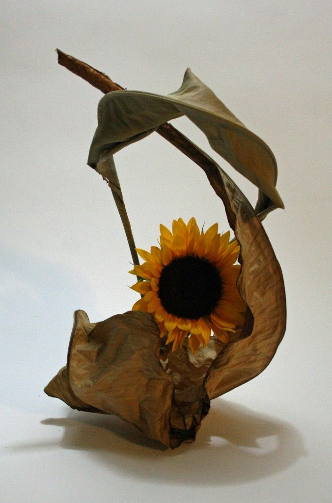 Sunflower with dried banana and strelitzia leaves