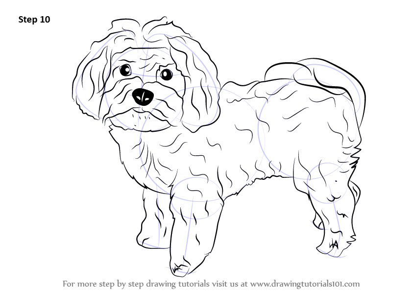 Learn How to Draw a Maltese Dog (Dogs) Step by Step