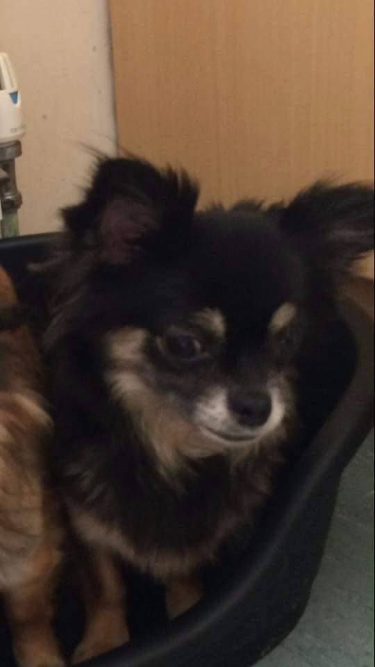 Lost Small Female Dog With Images Dogs Find Pets Pets