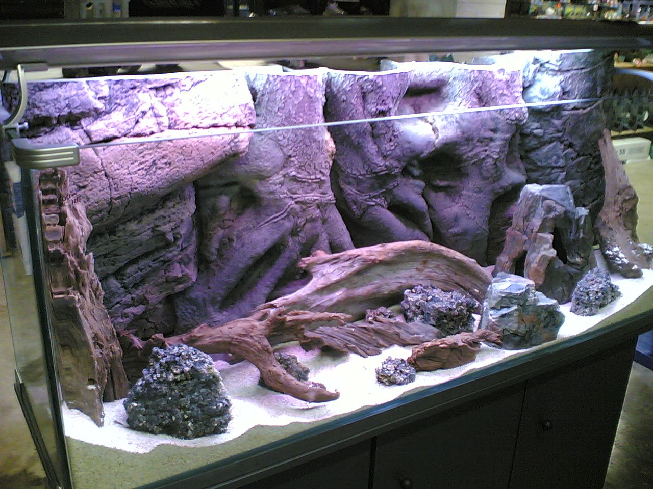 Fish for coldwater aquarium - Cold Water Aquarium Check Out The Rock Wall