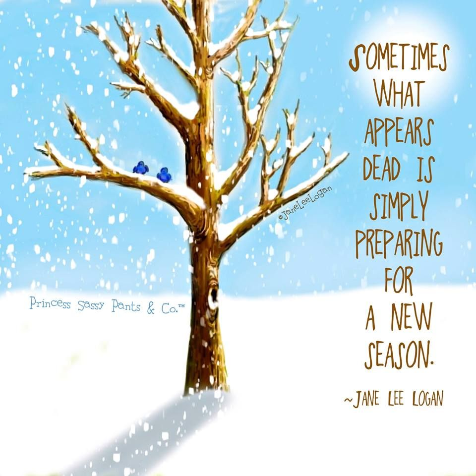 SOMETIMES WHAT APPEARS DEAD IS SIMPLY PREPARING FOR A NEW