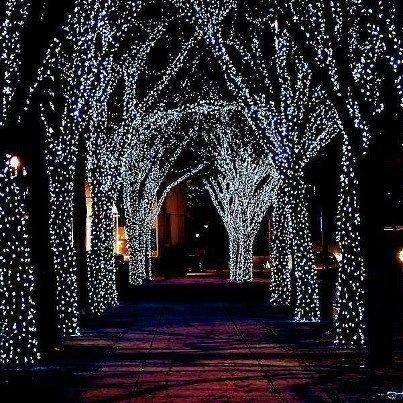 In The Lane Lights Are Sparkling Solar Powered Fairy Lights Solar Fairy Lights Outdoor Christmas