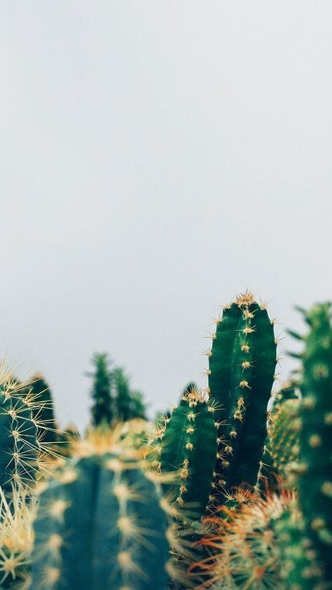 10 Fonds D Ecran Super Pretty Pour Iphone X Succulents Wallpaper Pretty Wallpapers Backgrounds Pretty Wallpapers