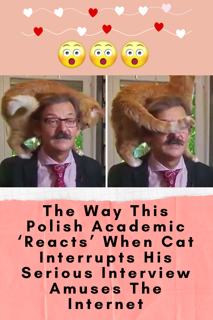Photo of The Way This Polish Academic 'Reacts' When Cat Interrupts His Serious Interview Amuses The Internet
