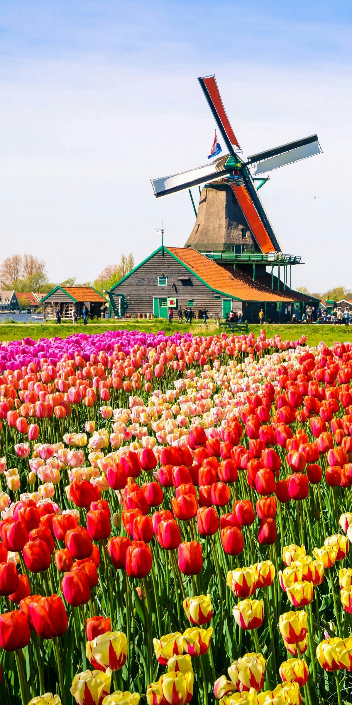 Beautiful Tulip Fields In Holland Get Inspired To Travel In Spring Tulips Tulipfields Netherlands T Netherlands Travel Places To Travel Beautiful Places