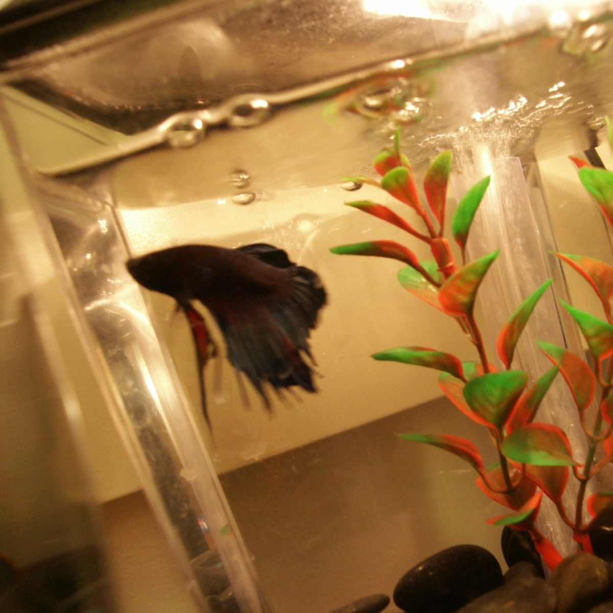 Fish aquarium cleaning tips -  Pet Sitters International Shares Tips For Pet Owners And Pet Sitters Who Need More Information On Caring For Betta Fish How To Clean Your Aquarium