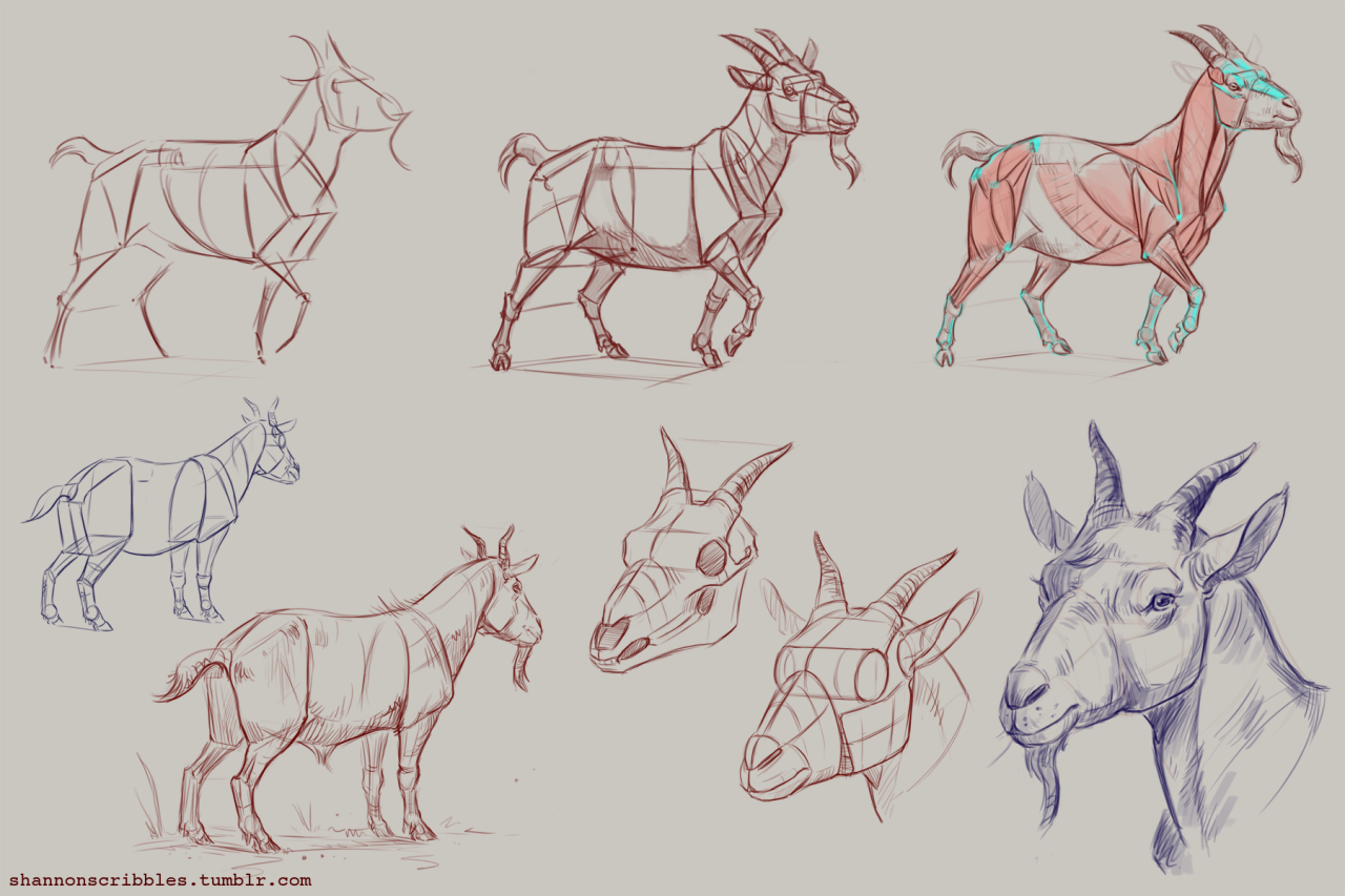 How to draw goats! Specifically pygmy goats. ;] | activities for ...
