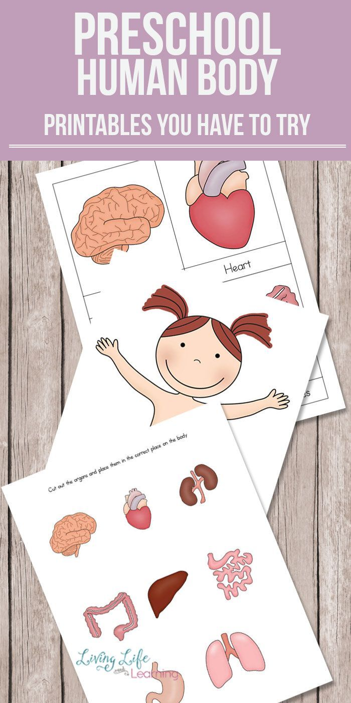 Preschool Human Body Printables | Body preschool ...