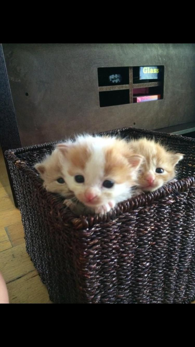 Good Morning Hello There Bright People Are You Catlover Or Have You Any Pretty Cats I Think You Love Cat Having Kittens Kittens Cutest Cute Baby Cats