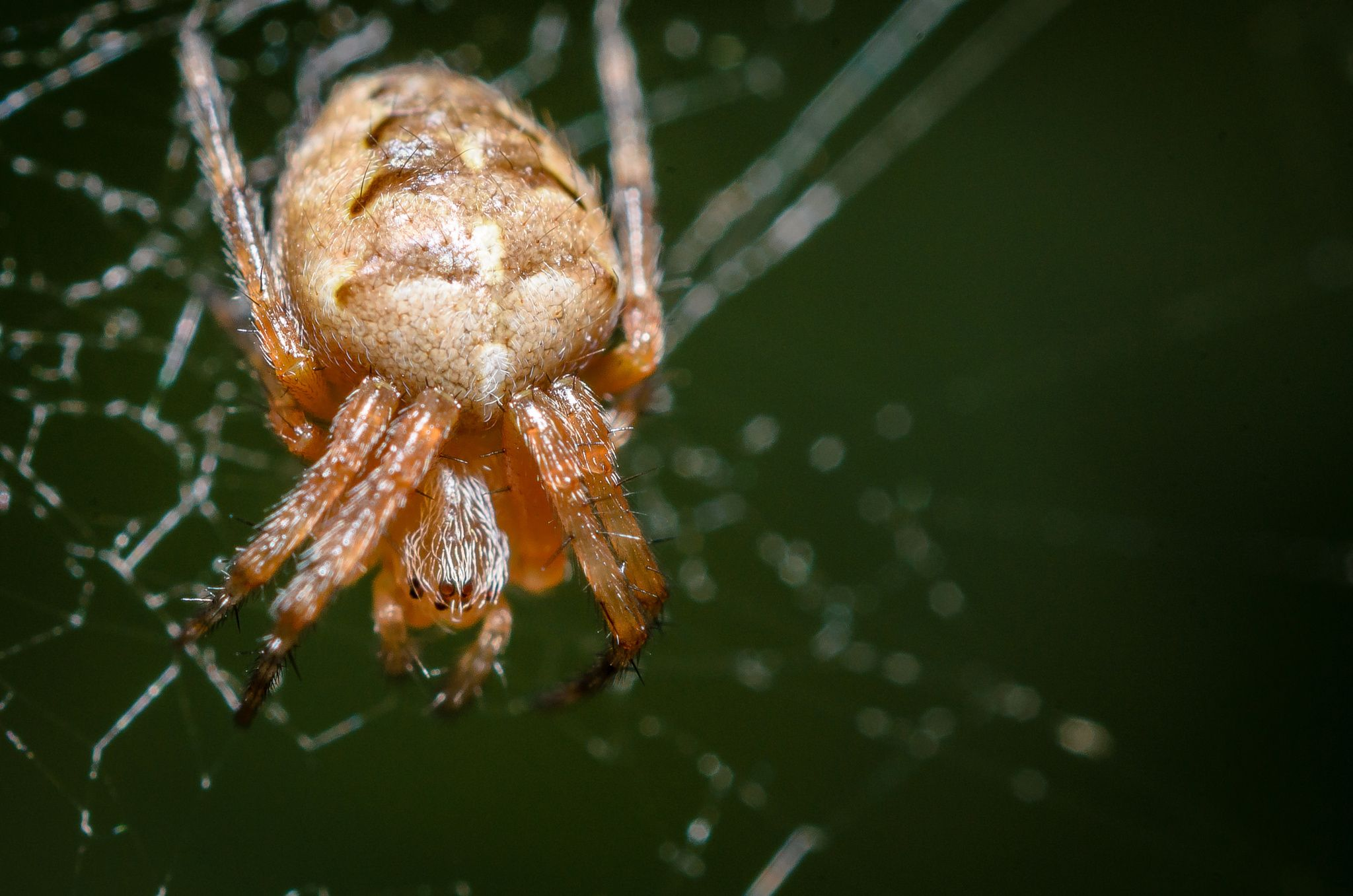 So small spider by Marek Weisskopf on 500px
