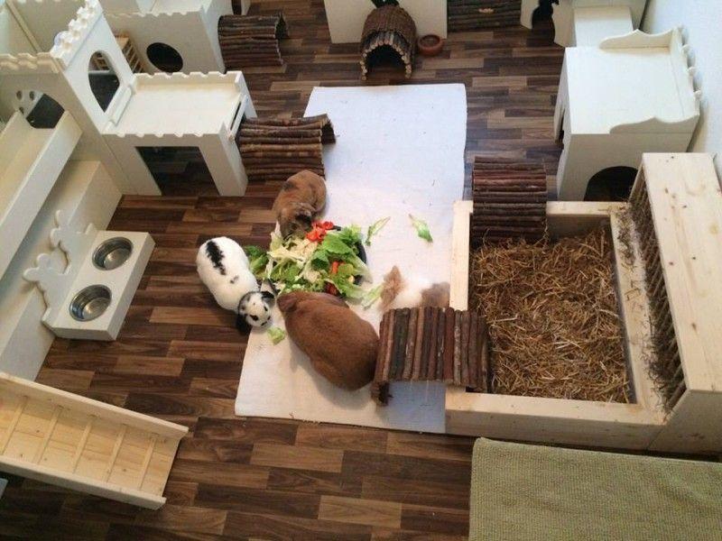 Innenhaltung Fotos Kaninchenhaltung, Kaninchen und