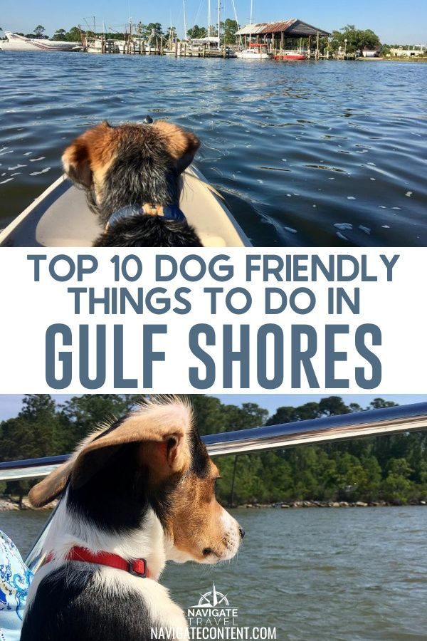 Top 10 Dog Friendly Things To Do In Gulf Shores Alabama Navigate Content In 2020 Dog Friends Dog Friendly Beach Gulf Shores Alabama Vacation
