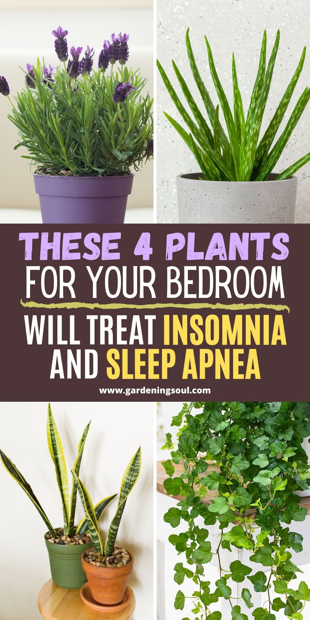 Photo of These 4 Plants For Your Bedroom Will Treat Insomnia and Sleep Apnea