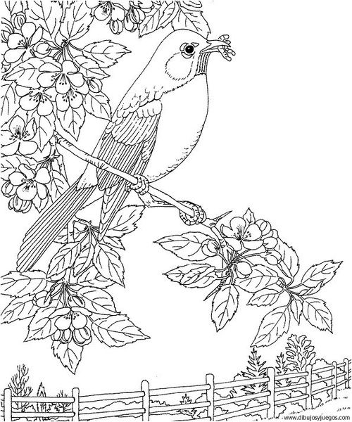 Free Printable Coloring PageMichigan State Bird And Flower Robin Apple Blossom Educational Printables