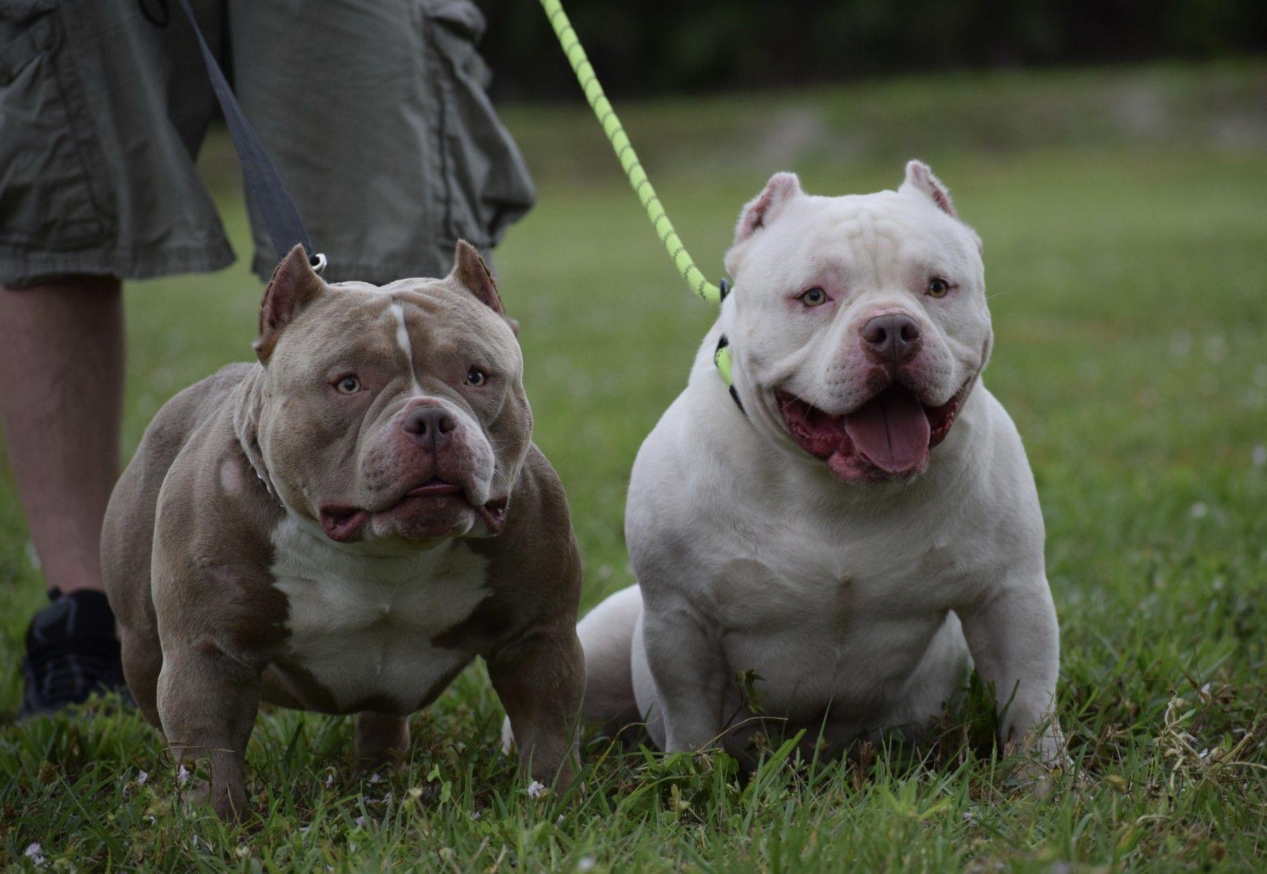 Фото охотничьей собаки крепления