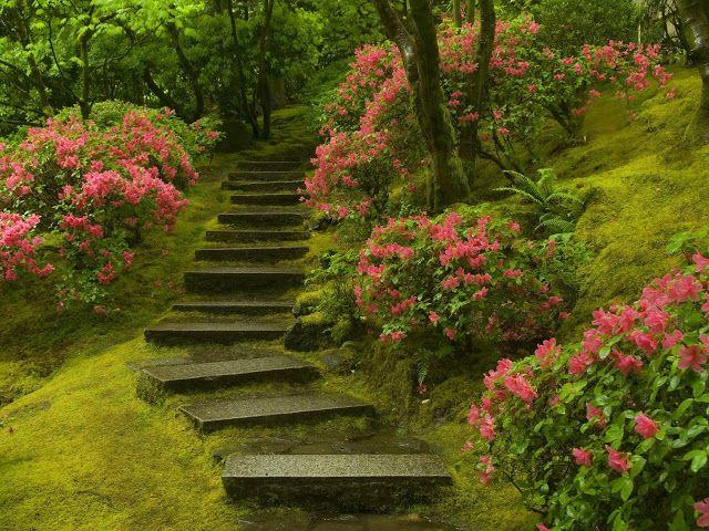 Japanese garden in Washington Park