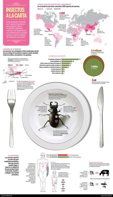 insectos | infografia | Pinterest | Insectos y Infografia