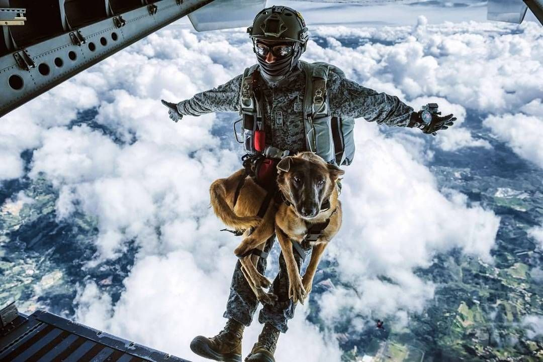 Caption Contest Add A Caption For This Colombian Air Force Paratrooper With His Service Dog Airforce Col Military Working Dogs Military Dogs Service Dogs