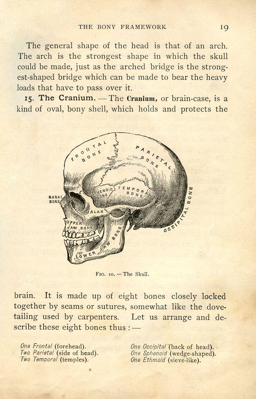 Vintage Halloween Clip Art - Anatomy Skull - Printable | Graphics ...