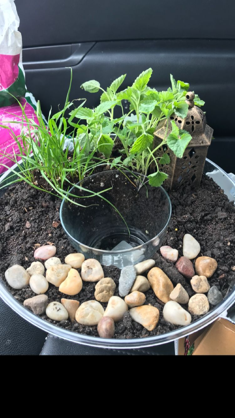 Dollar tree cat terrariumwater bowl garden total 12