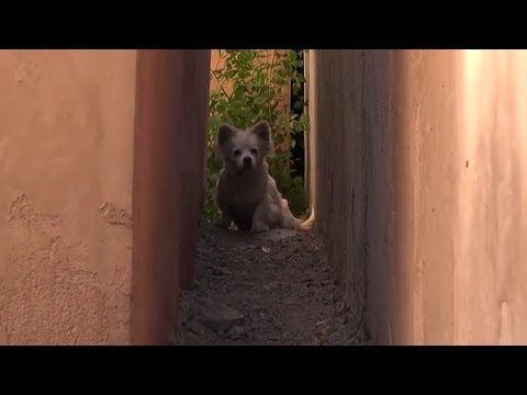 You Tube Hunde