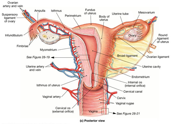 The Beautiful Cervix Project - teaching Women about our bodies and ...
