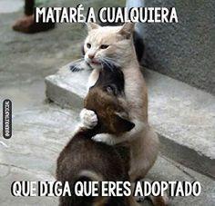 No Eres Adoptado Cute Animals Funny Animals Funny Animal Quotes