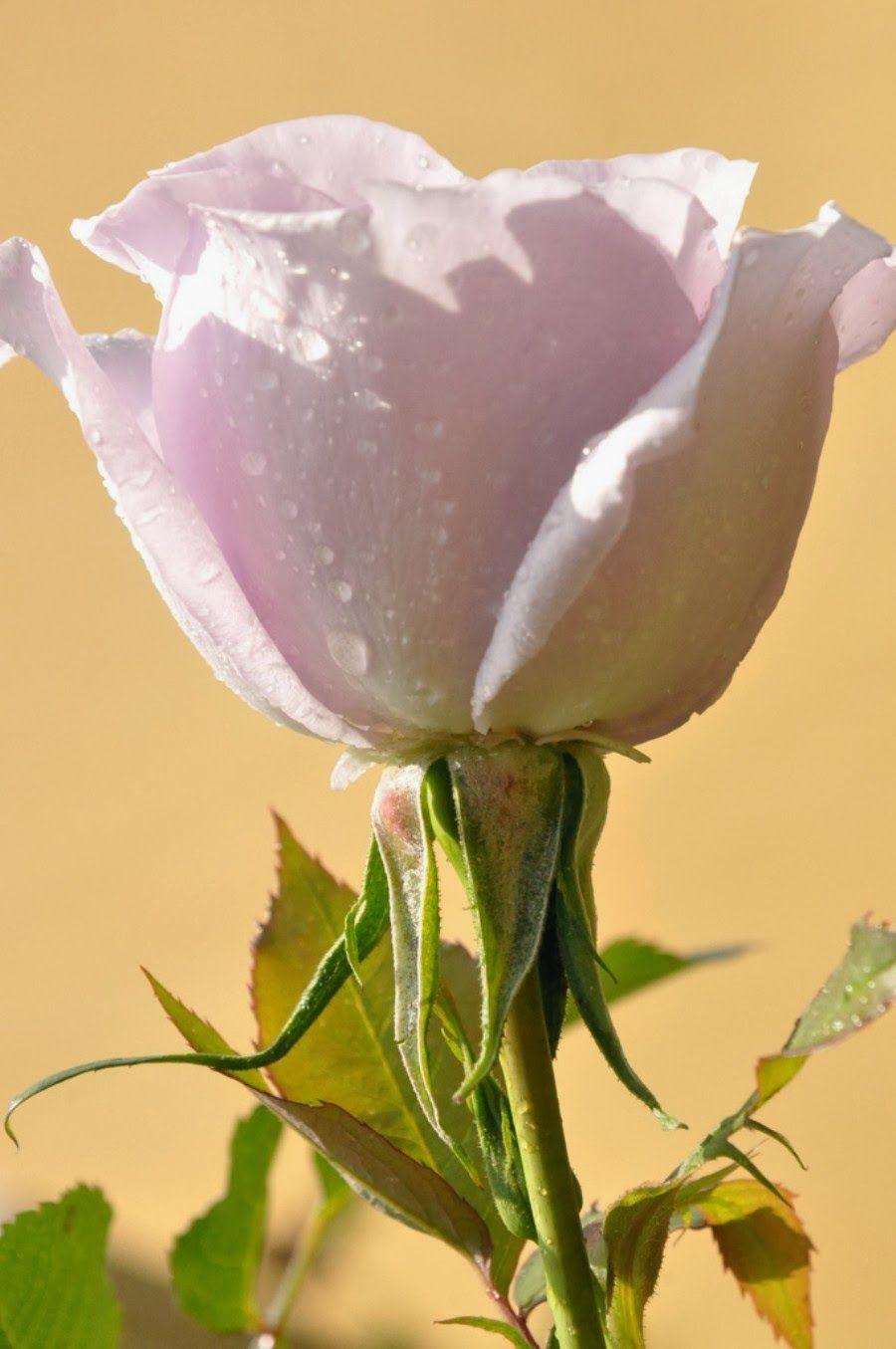 World Beautiful Flowers Images Hd Djiwallpaper