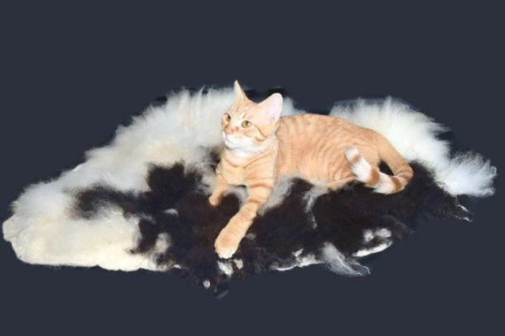 Cruelty Free Icelandic Lamb Cat Bed Pet Bed Dog Mat By Catsloveewe Cat Bed Dog Pet Beds Cat Love