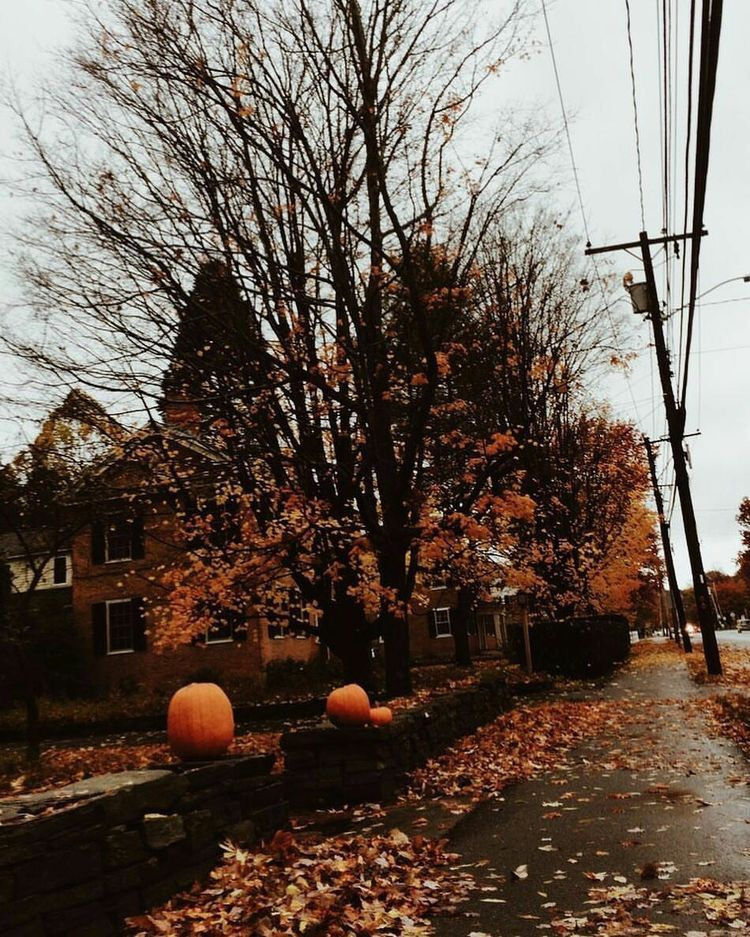 autumn halloween aesthetic - Pesquisa Google #halloweenaesthetic