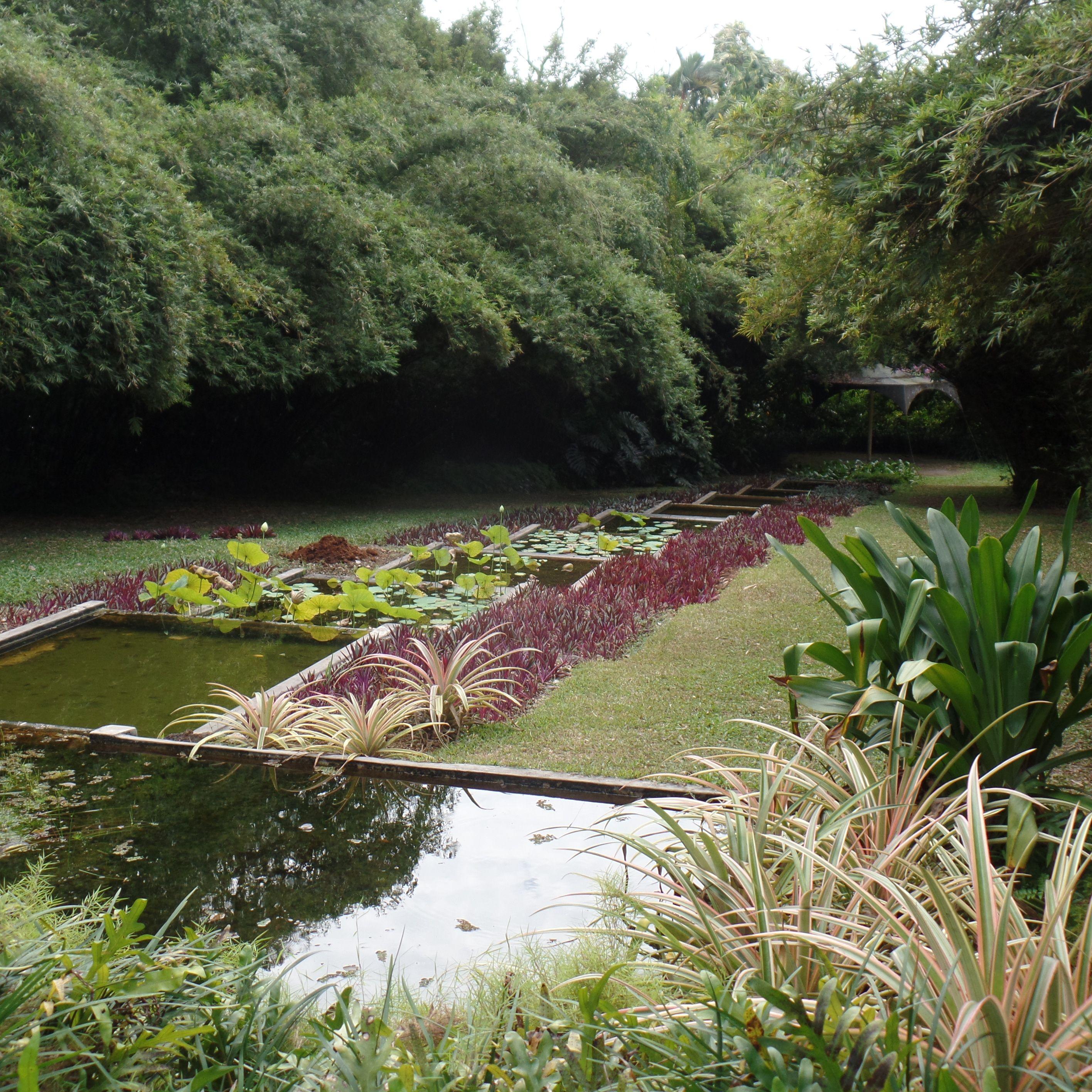 bevis bawa / gardens at villa lunuganga, bentota
