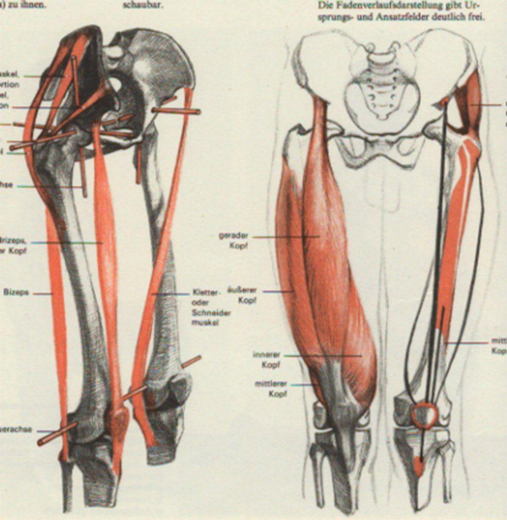 Leg Anatomy Anatomy Human Body References Pinterest Leg
