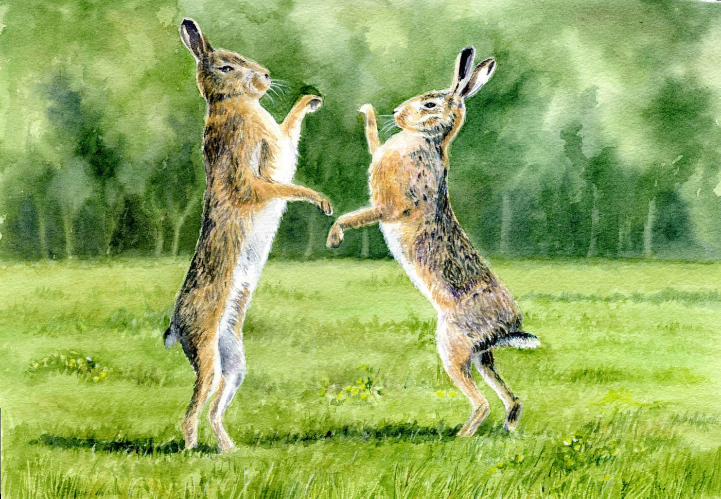 Hares Boxing. A  watercolour by Sylvia Twiss