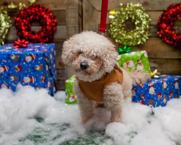 Lookbook PuppyCon — DOG & CO. Lookbook, Dogs, Teddy bear