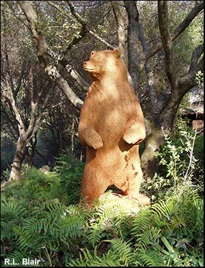 Life size wood carved bears, wooden Grizzly Bear sculptures and woodcarvings by sculpture artist R. 4 ft, 5 ft, 6 ft, 7 feet tall Bear statue for bold ...