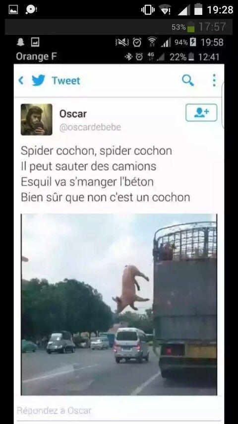 Spider cochon, spider cochon, vas-tu lire la description ?