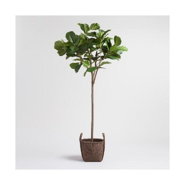 Cost Plus World Market Faux Fiddle Leaf Fig Tree ($180) ❤ Liked On Polyvore